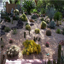 Cactus Display In the Shade