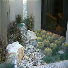Barrel Cactus in the Garden
