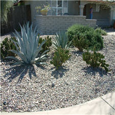 Agaves and Shrubs